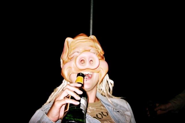 2 Schweine in Australien