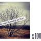100 CDs und mein ewiger Dank