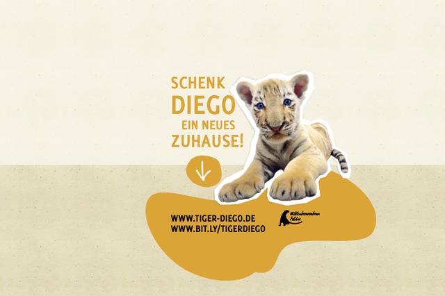 Ein neues Zuhause für Tiger Diego