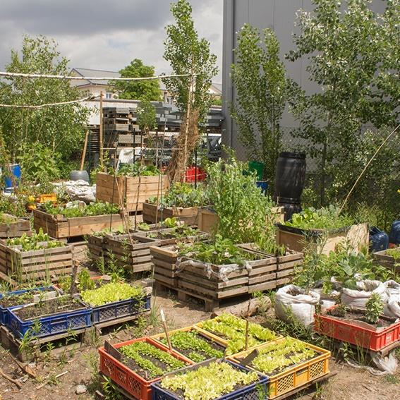 Einführungskurs: Terra Preta im urbanen Garten