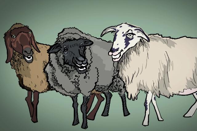 ELBWOLLE - Wir geben Wolle wieder einen Wert!