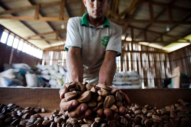 B.Nuts! Paranüsse essen, Amazonas retten