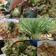 Dinner am Acker für 8 Personen