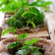 Bau deinen eigenen vertikalen Garten! 3 Tage Workshop