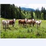 Bio Weide-Beef aus Sibratsgfäll (5kg Fleischpaket)