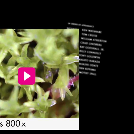 Mikroskop-Videoaufnahme und Dein Name im Abspann