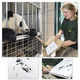 Buch signiert von Pandabärin Yang Yang