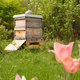 Experience a year with bees – sponsor a whole hive