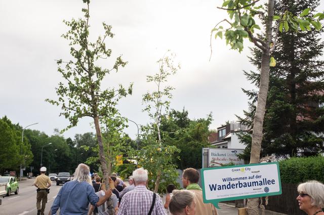 Wanderbaumallee