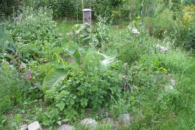 Naturnahe Gartenlandwirtschaft