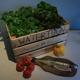 Deluxe Watertuun-Salat- und Fischkiste