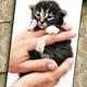 Gib dem Kätzchen einen Namen