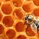 Honig aus dem Heimat-Garten