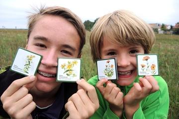 NATUR-MEMO Spiel Essbare Wildpflanzen