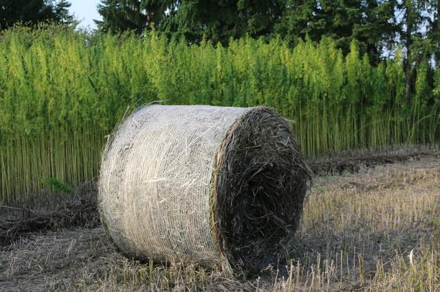 The Hempseed-Harvesting-Machine-Project