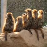 Führung und Get-together im Tierpark Sababurg