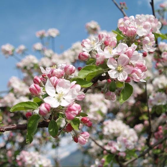 Blütenfahrt