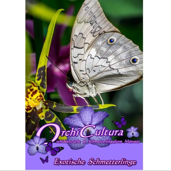 Schmetterlings-Broschüre