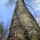 Ein Baum mit einem besonderen Spruch - nur für Dich!