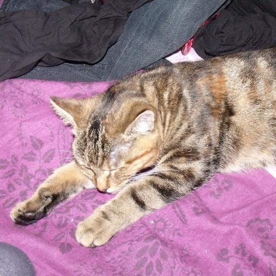 Foto von unserer Katze mit Autogramm.