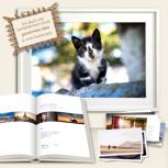 MAROKKO DELUXE EDITION - Katze. Signiertes Buch, gerahmtes Bild (50x75 cm) & zwei Kartensets. Deutschlandweit freihaus!