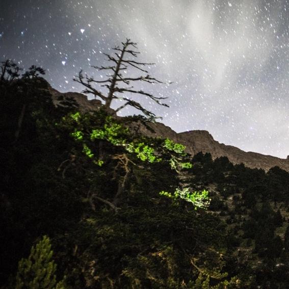 Eintritt zum Waldkonzert bei Nacht