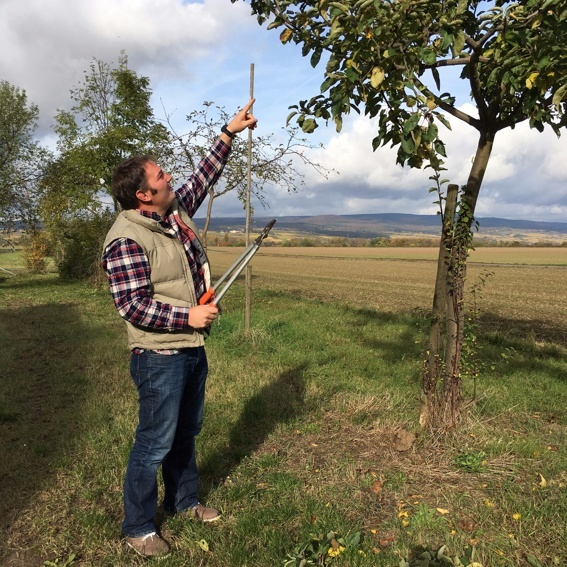 Baumschnittkurs auf Ingelheims Obstfeldern für Zwei