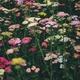 Flowerpower - Pflanzen für den Hub