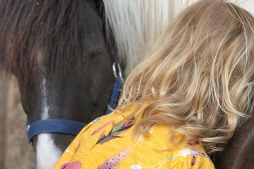 Pferde stärken Therapie