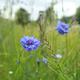 Eine Tüte Blütenmeer Saatgut
