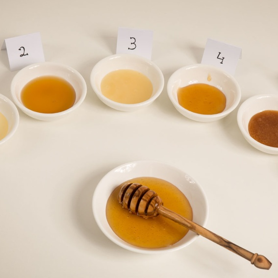 Honey tasting – discover the variety of flavors of honey