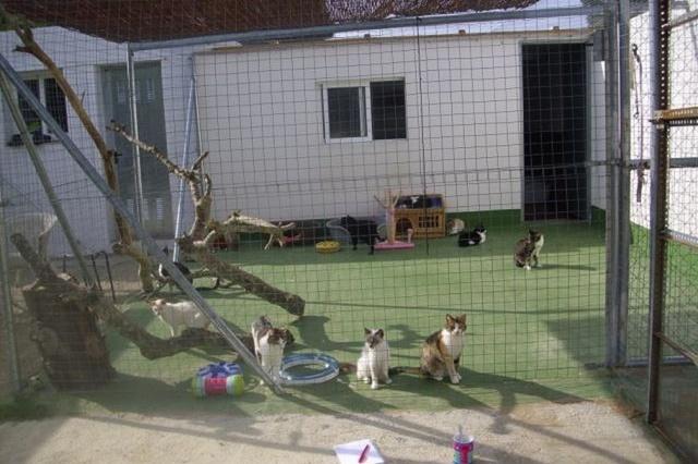 Sieben-Katzenleben e.V. - Rettung Auffangstation
