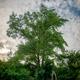 Baum-Pate werden