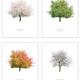 Arboretum-Baumportraits, Jahreszeitenserie, 4 Artprints 50 x 40 cm
