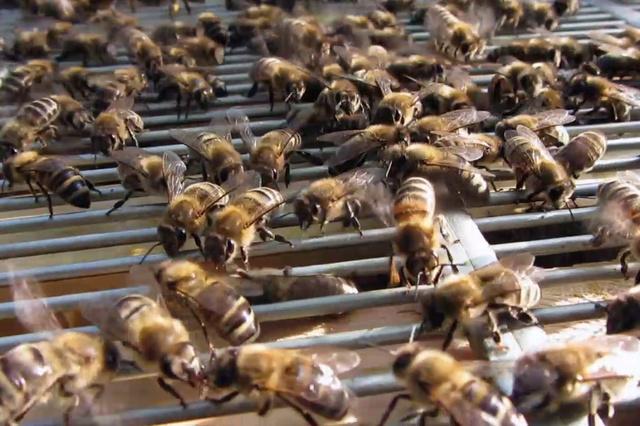 Bienenretter - Naturkosmetik