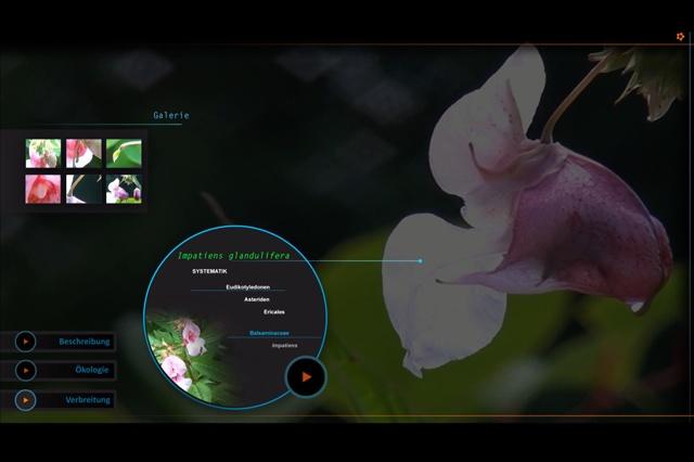 interaktiver Erklärfilm - Bienen