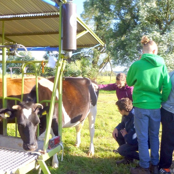 Lern Stolze Kühe kennen