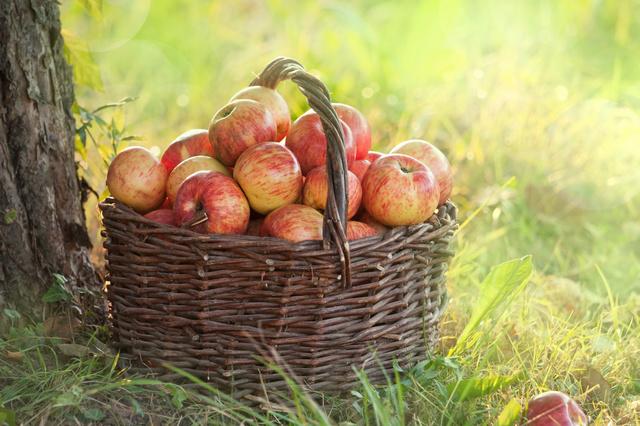 Ingelbaum - natürlich.deine.äpfel