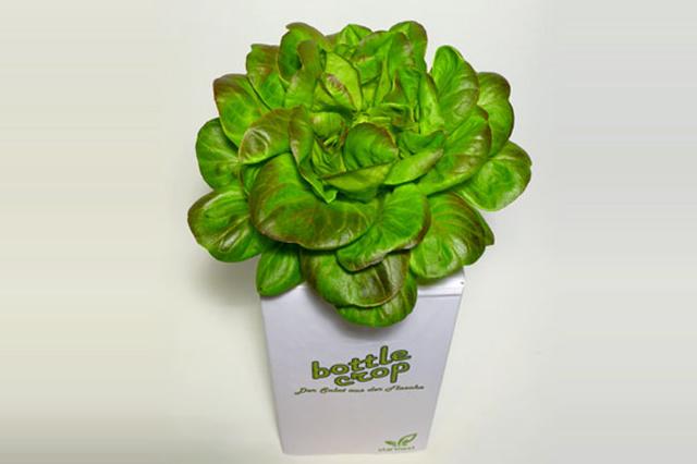 BottleCrop - Der Salat aus der Flasche