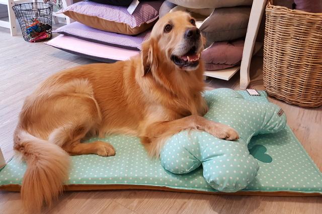 Cookies for Friends - Feines für Mensch und Hund