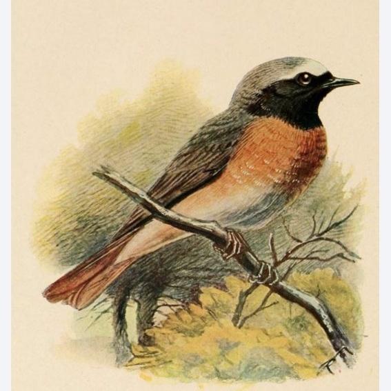 Early Bird Fan-Paket