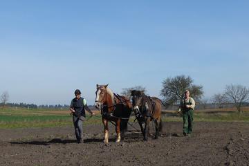 Pferdearbeitskurs Gemüsebau