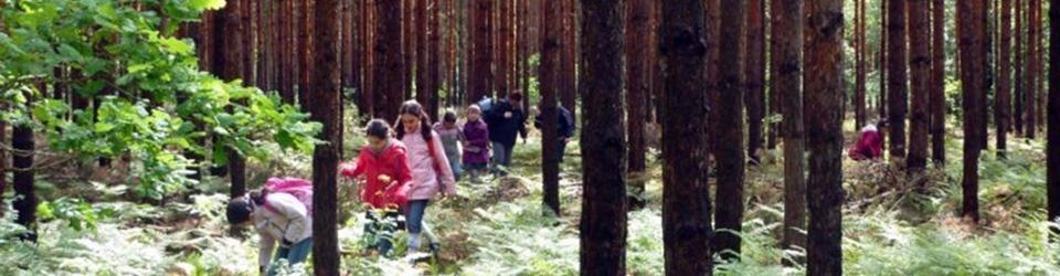 Schule im Wald - Patenförsterprojekt