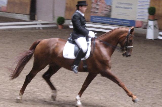 PfEn - Energetische Nutzung von Pferdemist