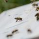 Adoptiere eine Biene