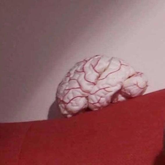 Wissenswertes - Was Dein Gehirn alles kann