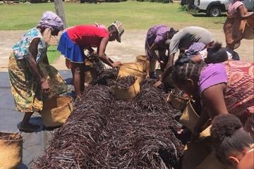 lavanila.de - faire Vanille direkt aus Madagaskar