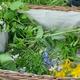 Kräutersammeln im Coconat-Garten + Tagespass + Mittagessen