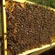 Bienenstockluft schnuppern (5 Min.)
