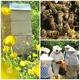 Nachmittag mit den Bienen im Bienenretter-Garten in Frankfurt